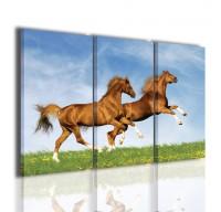 Horses II - 120x90 cm