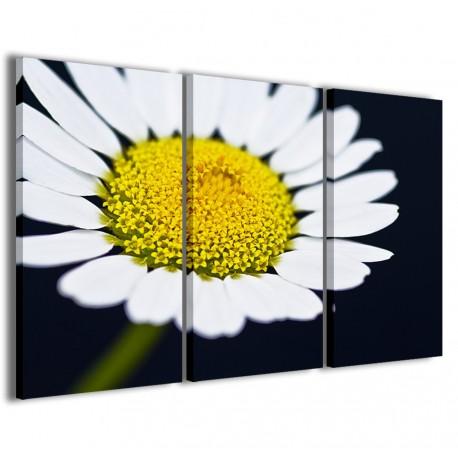 Macro Daisy I 120x90 - 1