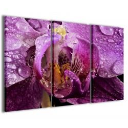 Macro Orchidea 120x90