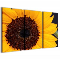 Macro Sunflower 120x90