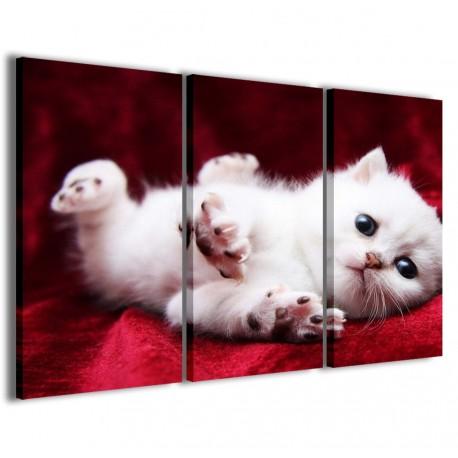 Kitty 120x90