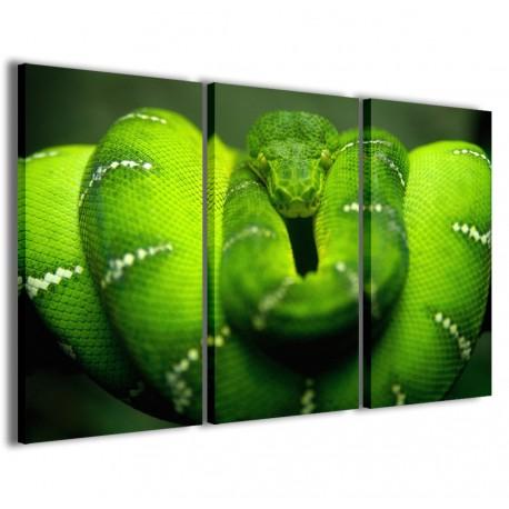 Snake Piton 120x90