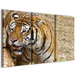 Tigre 120x90