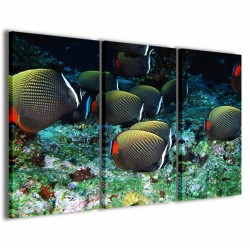 Tropical Fish 120x90