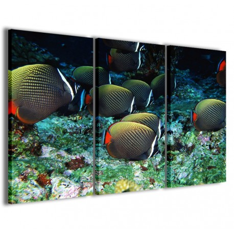 Tropical Fish 120x90
