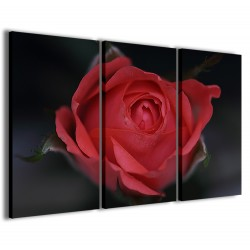 Bouche Rose 120x90