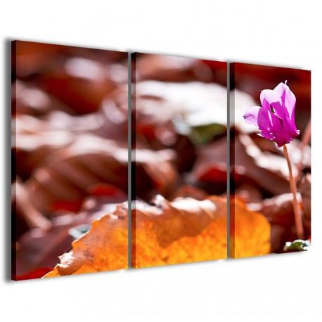 Cyclamen Flowers 120x90 - 1