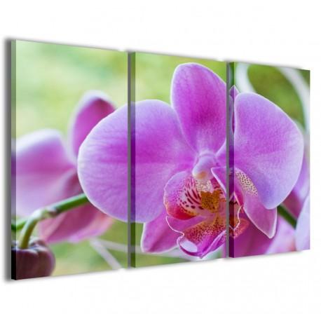 Orchidea 120x90 - 1