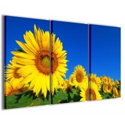 Sunflower 120x90