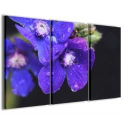 Violetta 120x90 - 1