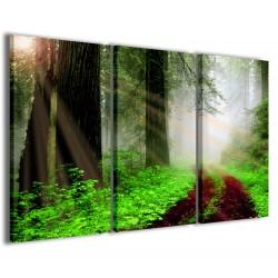 Redwood Park 120x90