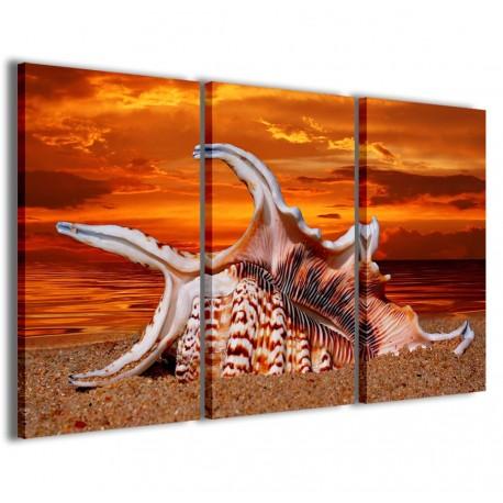 Sea Shell 120x90 - 1