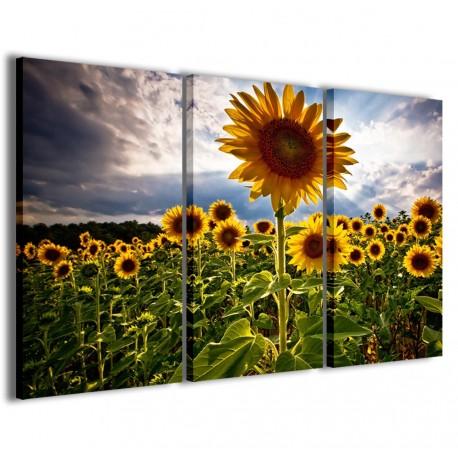 Sunflowers V 120x90 - 1