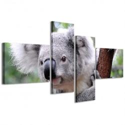 Koala 160x70