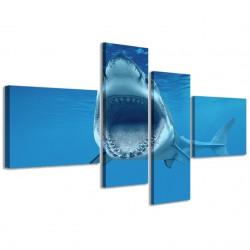 Shark 160x70