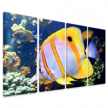Butterfly Fish 160x90 - 1