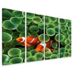 Clownfish Anemone 160x90