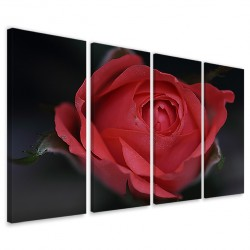 Bouche Rose 160x90 - 1