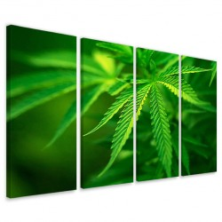 Cannabis Foliage160x90