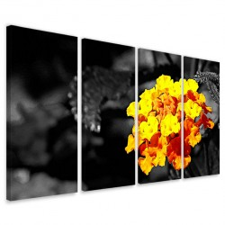 Black Color Flower 160x90
