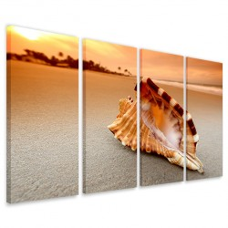 Conch on Sea 160x90