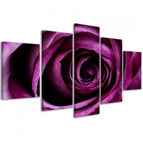 Violet Rose / 012 - 1